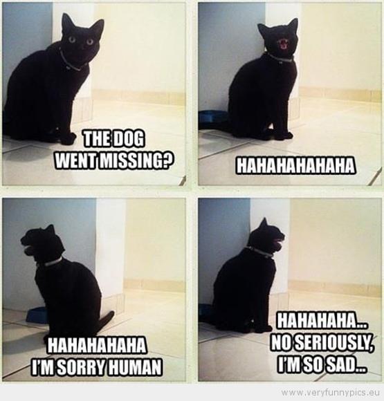 How Antisocial kitty reacted to the dog running away (a reenactment of course).