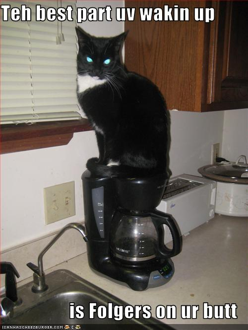 That's my old coffee maker there.  That's not my cat.