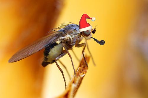 christmas fly