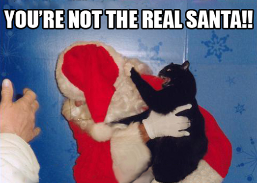 funny-cat-attacking-Santa-Claus
