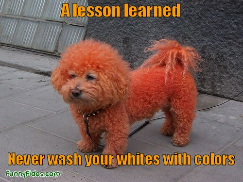 funny-dog-picture-lesson-learned