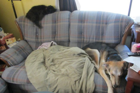 The reality, pets that dislike each other.  At least they're on the same piece of furniture!