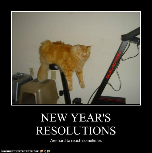 new years cat