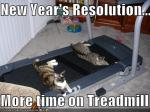 new-years-resolutions-cats-treadmill-exercise