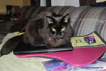 The cat has determined that I will blog no more for the day...
