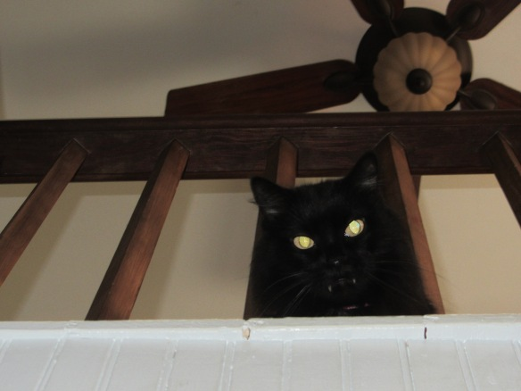 Don't mess with the upstairs-it's her domain.