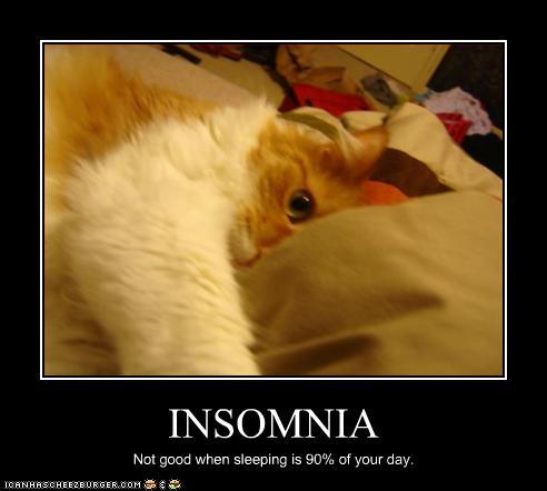 insomnia cat