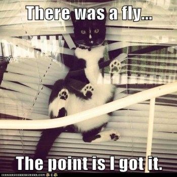 Did I mention my cat tries to catch flies?