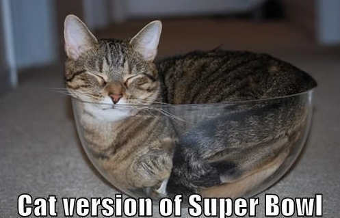 cat superbowl