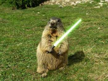 Help me Obi Wan Groundhog, you're my only hope!