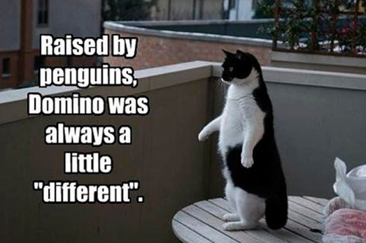 penguin cat
