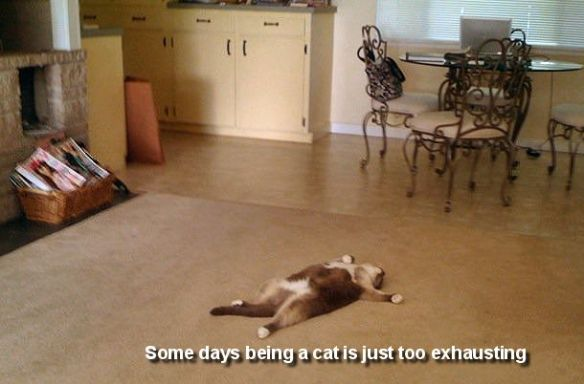 exhausted-cat