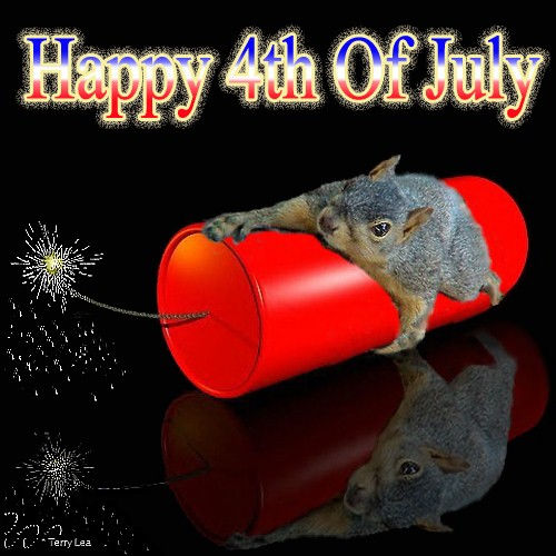 firecracker squirrel