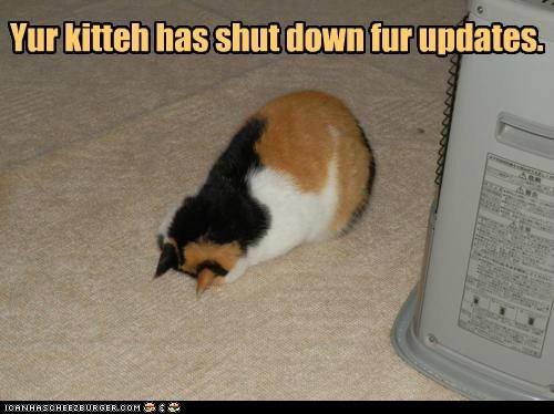 update kitty