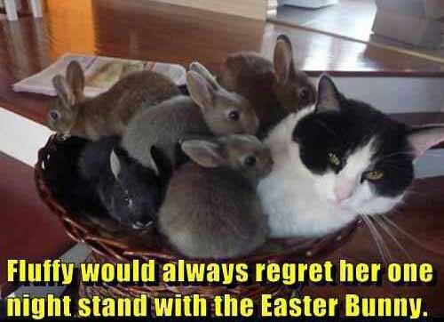 cats-one-night-stand-with-easter-bunny