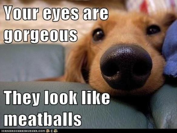 beautiful-eyes-funny-dogs