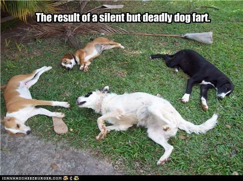 sbd dog fart