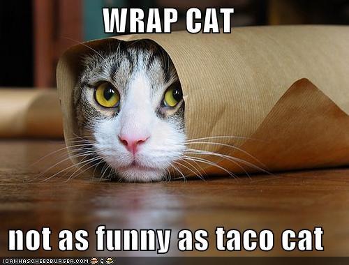 wrap cat