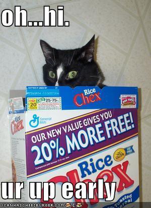 chex cat
