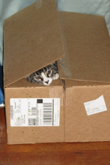 At the top of the cat's Christmas list?  A box?  And that's fine with me.