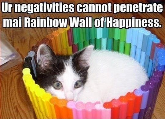 funny-cat-rainbow-wall