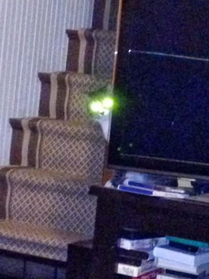 Alien kitty  is after you!!