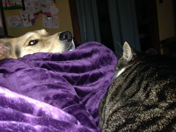 This is visual proof of why I get nothing accomplished often.  Cuddly animals and warm soft purple blankies.