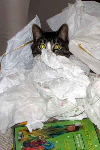 Kitty does care about wrapping paper...